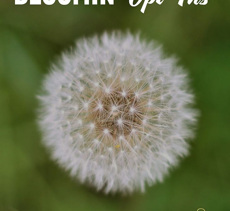 BLOOMin' Opt-Ins …
